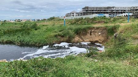 処理場の予定地 生活排水により沼地が黒ずむ